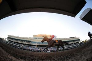 Florida Thoroughbred and accredited Quarter Horse Racing